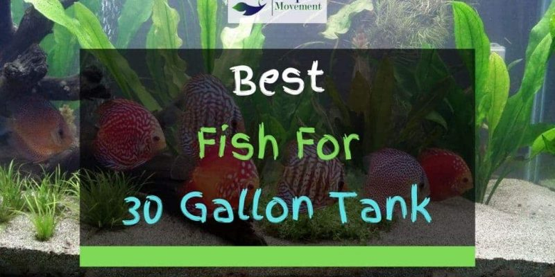 11 Best Fish For 29 And 30 Gallon Tank (With Pictures)