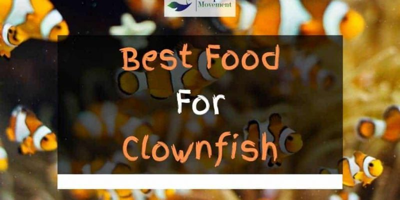 Best Food for Clownfish – Top 5 Review