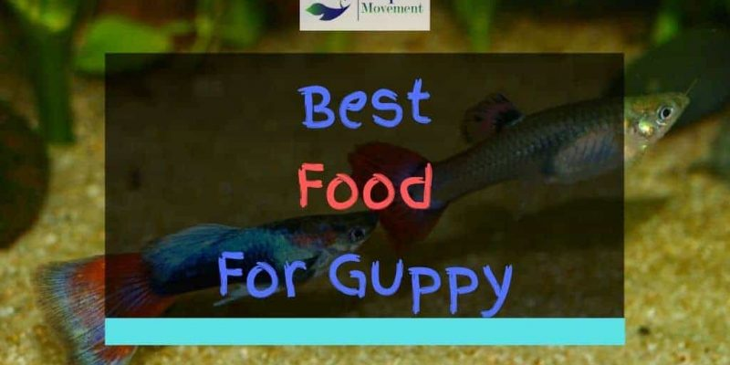 Best Food for Guppy Fish – Top 6 Review