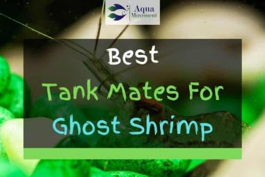 11 Best Ghost Shrimp Tank Mates (With Pictures)