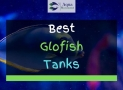 5 Best Glofish Tanks in 2020 Reviewed