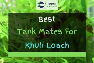 13 Best Kuhli Loach Tank Mates (With Pictures)