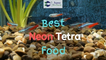 Best Food for Neon Tetra Fish – Top 5 Review
