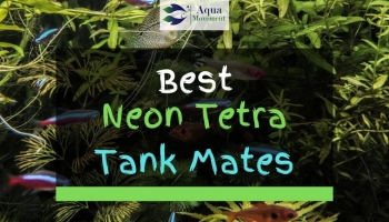 13 Best Neon Tetra Tank Mates (With Pictures)