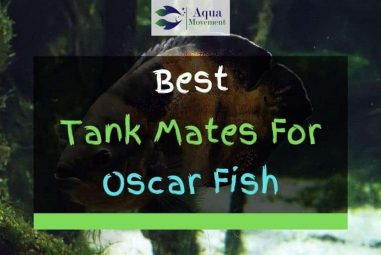 15 Best Oscar Fish Tank Mates (With Pictures)