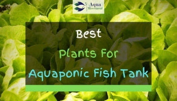 10 Best Plants For Aquaponics Fish Tank