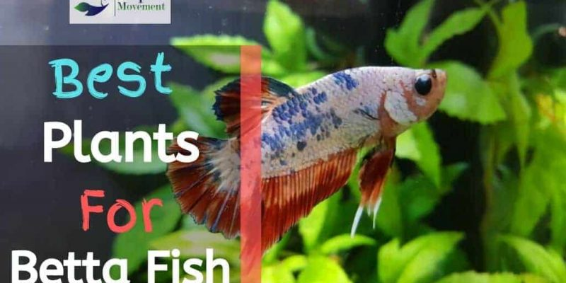 15 Best Live & Fake Plants For Betta Fish Tank Reviewed