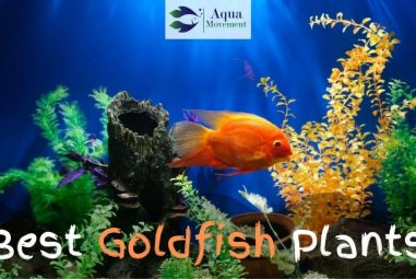 13 Best Plants For Goldfish – Do you know them all?