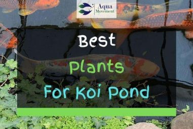 13 Best Plants for Koi Ponds – With Pictures