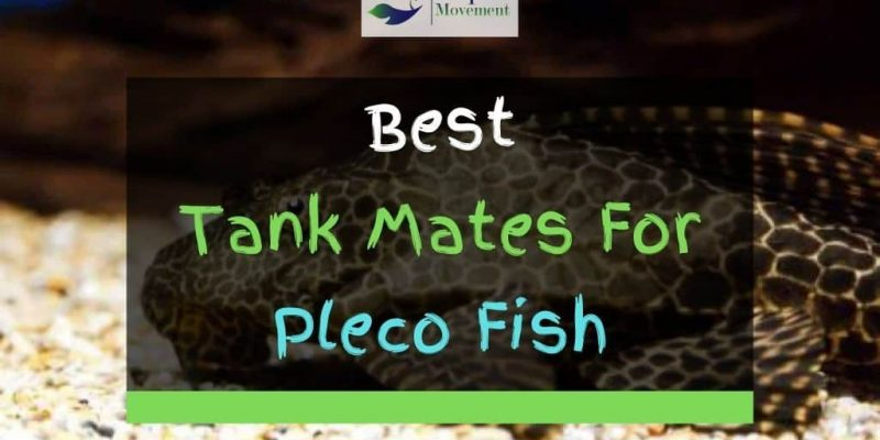 18 Best Pleco Tank Mates (With Pictures)