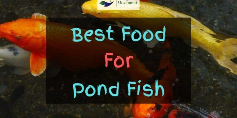 Best Pond Fish Food – Top 6 Review