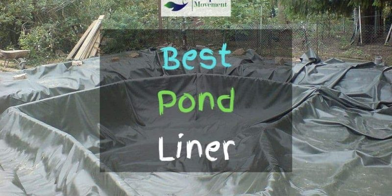 5 Best Pond Liners For Small And Large Ponds