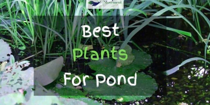 15 Best Plants For Your Pond Reviewed
