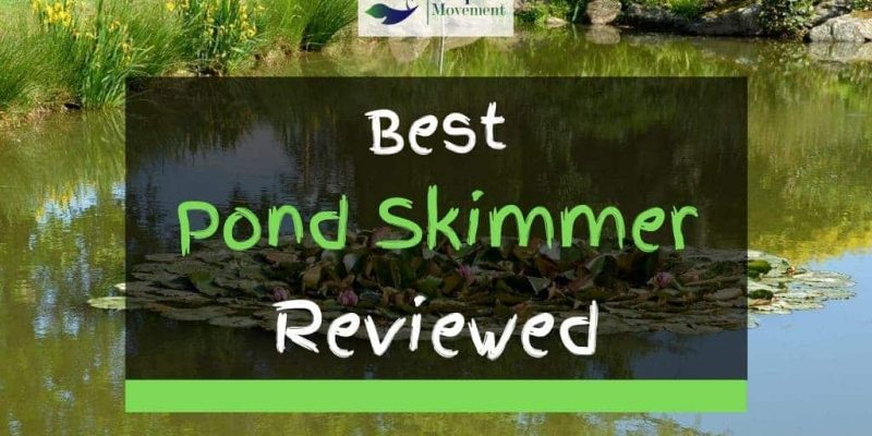 5 Best Pond Skimmers in 2021 Reviewed