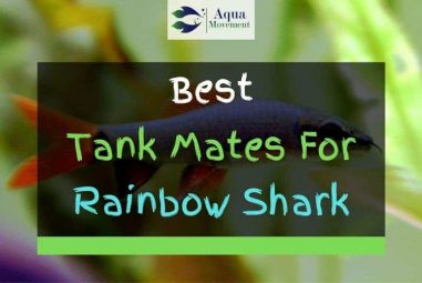 9 Best Rainbow Shark Tank Mates (With Pictures)