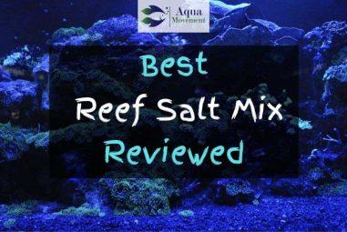 Best Reef Salt Mix – 2021 Reviews
