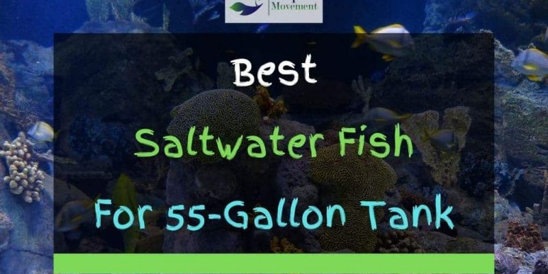 13 Best Saltwater Fish For 55 Gallon Tank (With Pictures)
