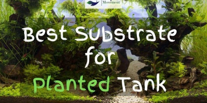 Best Substrate for Planted Tank – Top 9 Review