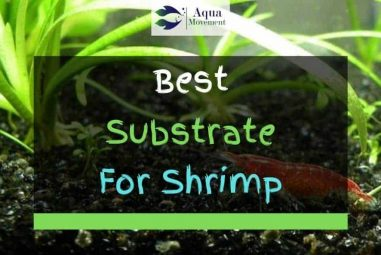 6 Best Substrates For Shrimps In 2021