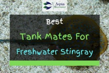 13 Best Freshwater Stingray Tank Mates (With Pictures!)