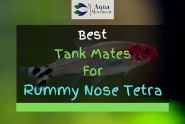 13 Best Rummy Nose Tetra Tank Mates (With Pictures!)