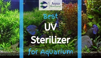 6 Best Aquarium UV Sterilizer for Freshwater, Saltwater, and Reef Tank (2020 Reviews)