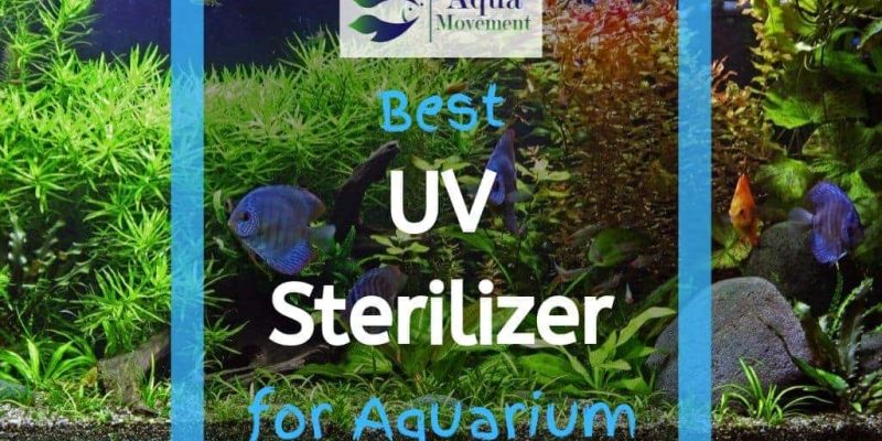 6 Best Aquarium UV Sterilizer for Freshwater, Saltwater, and Reef Tank (2021 Reviews)