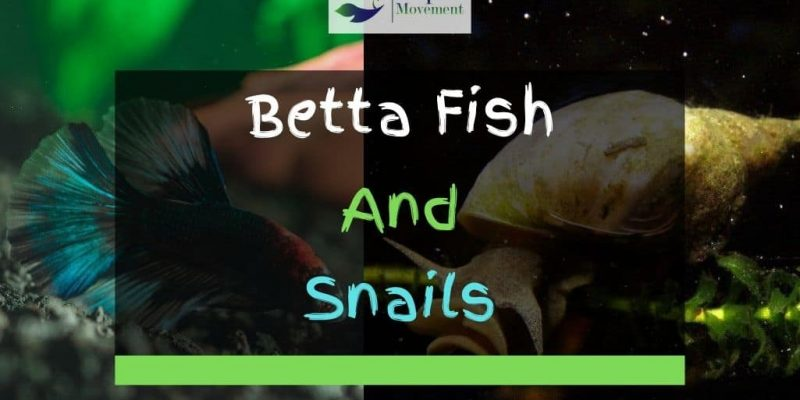 Betta Fish And Snails – Can They Live Together?