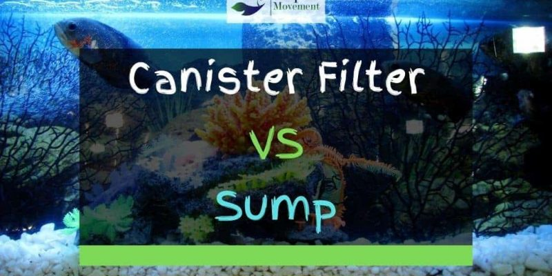Canister Filter VS Sump – Which One To Choose?