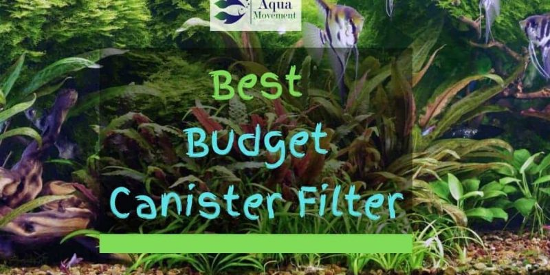 Cheap Canister Filter – 4 Budget Filter Reviewed