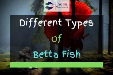 45 Different Types Of Betta Fish (With Pictures)