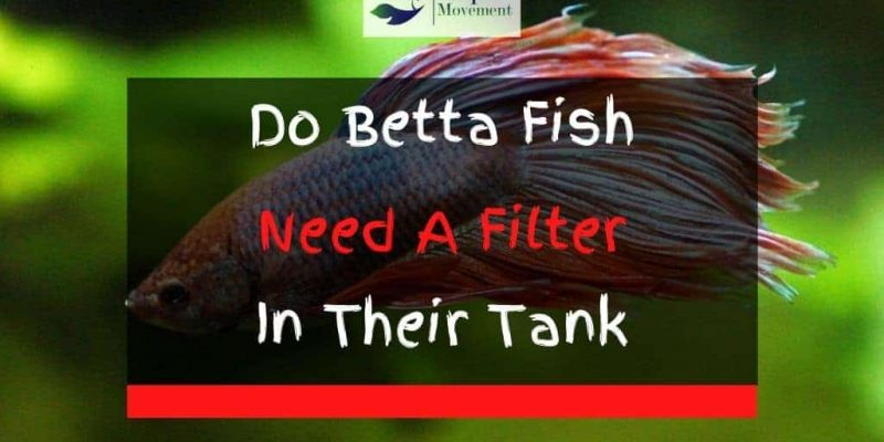 Do Betta Fish Need A Filter in Their Tank?
