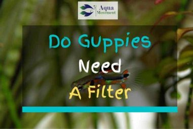 Do Guppies need a Filter? Find the Answer here!