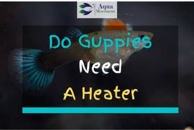 Do Guppies Need a Heater? 6 Guppy Temperature FAQs and Answers