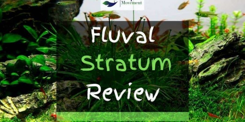 Fluval Stratum Substrate Review – Good for Planted Tanks?