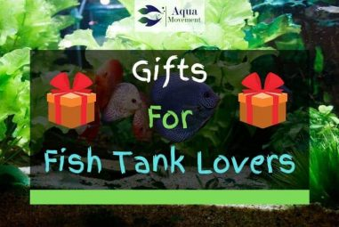 17 Gift Ideas for Fish Tank Lovers
