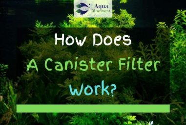 What Is A Canister Filter And How Does It Work?