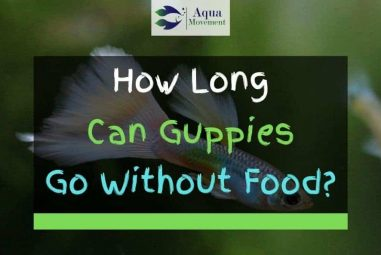 How Long Can Guppies Go Without Food?