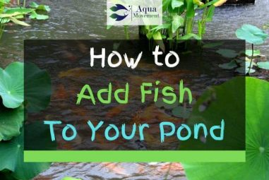 How to Add Fish to Your Backyard Pond