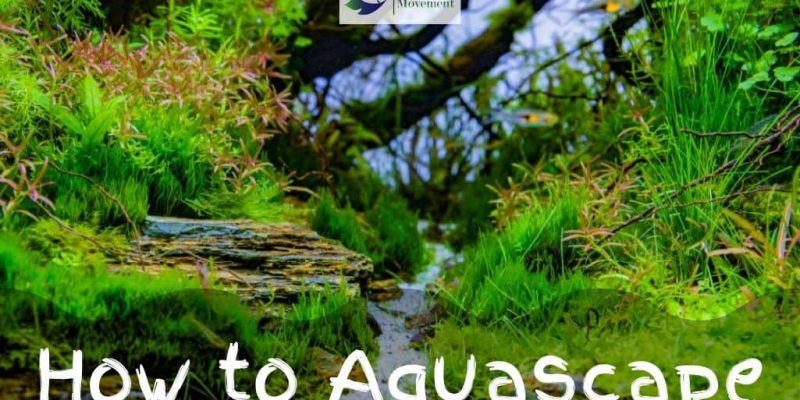 How To Aquascape: A Full Guide