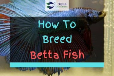 How to Breed Betta Fish – 7 Step Guide