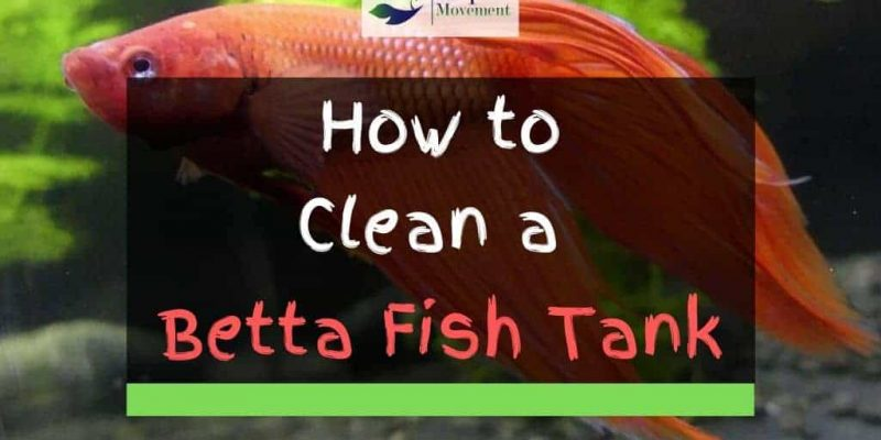 How To Clean A Betta Fish Tank – 12 Step Guide