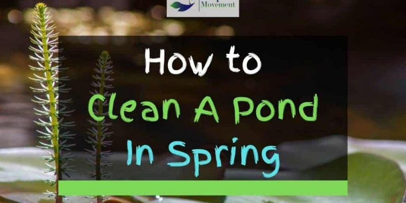 7 Steps To Clean A Pond In Spring