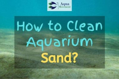 5 Steps On How To Clean Aquarium Sand