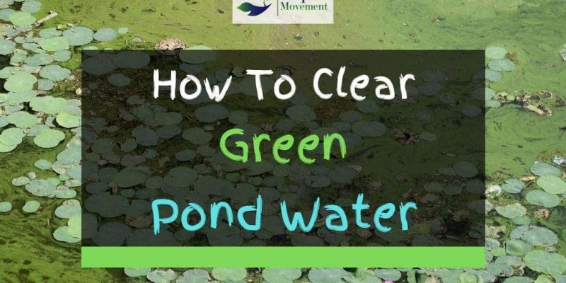 6 Ways On How To Clear Green Pond Water