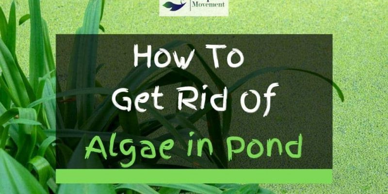 How to Get Rid of Algae in Ponds