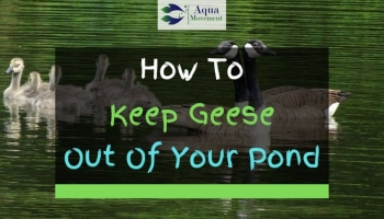 3 Ways To Keep Geese Out Of Your Pond