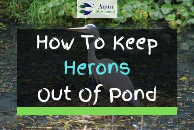 11 Ways To Keep Herons Out Of Your Pond