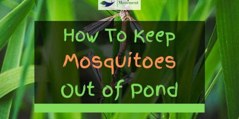 5 Ways To Keep Mosquitoes Out Of Pond