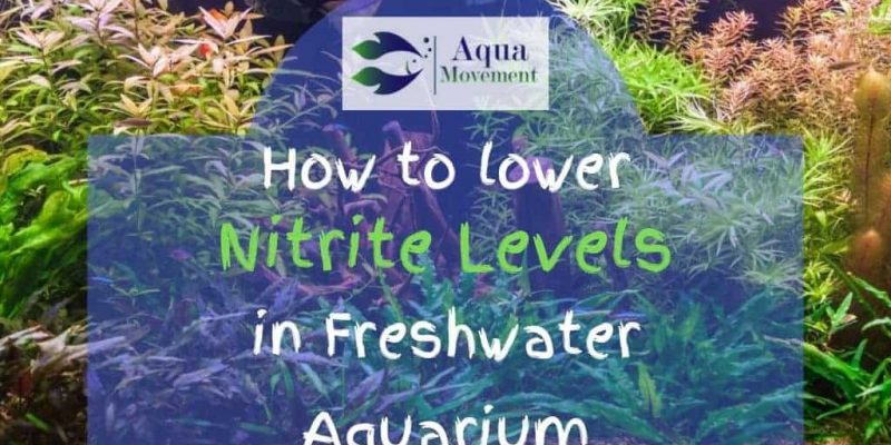 How to Lower Nitrite Levels in Freshwater Aquarium
